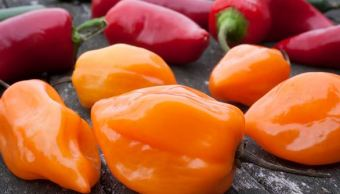 Científicos en Yucatán mejoran la semilla del chile habanero