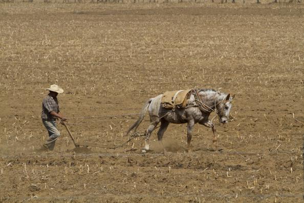 El capitulo agropecuario avanza en renegociación del TLCAN