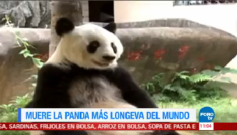 Extra Muere Panda Longeva Mundo Basi