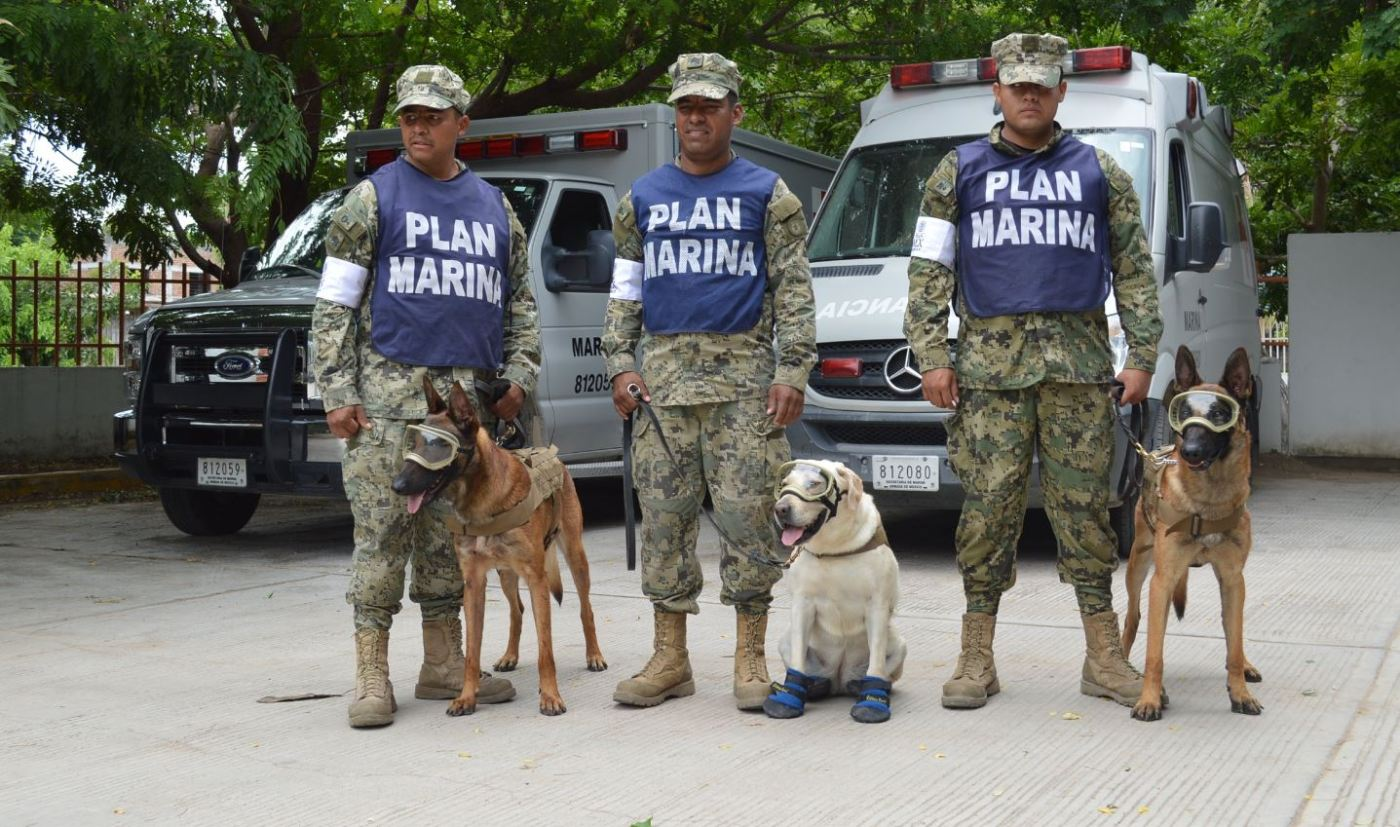 'Frida' pertenece a la Unidad Canina de la Secretaría de Marina de México