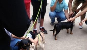 Buscan a mascotas desaparecidas tras sismo en la CDMX
