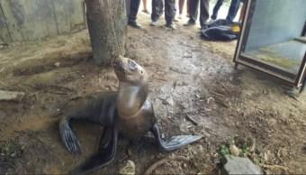 lobo marino muere despues de ser torturado en ecuador