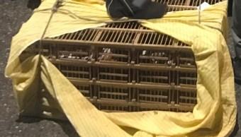 policia federal asegura varias aves en veracruz