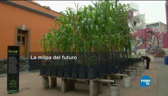 Unam Desarrolla Milpa Futuro Grupo Ingenieros Sustentables