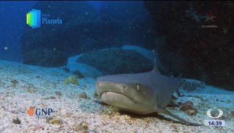 La Isla del Coco, isla de tiburones