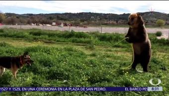 Oso y perro se divierten con manguera de agua en España