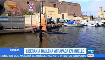 Ballena queda atrapada en un embarcadero de Marsella, en Francia