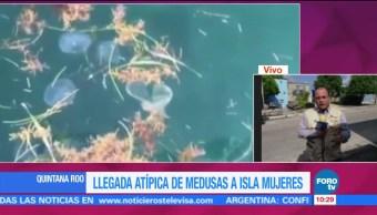 Llegada atípica de medusas a Isla Mujeres