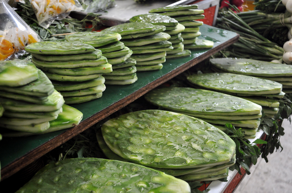 En China quieren patentar la producción del nopal