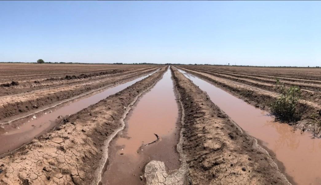 agricultores se preparan para cultivar trigo en sonora