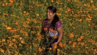 indigenas chiapas flor cempasuchil tzotziles corte