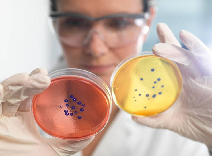 Científicos rusos descubren cómo prevenir resistencia a los antibióticos