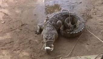 rescatan a cocodrilo en una playa de coatzacoalcos veracruz
