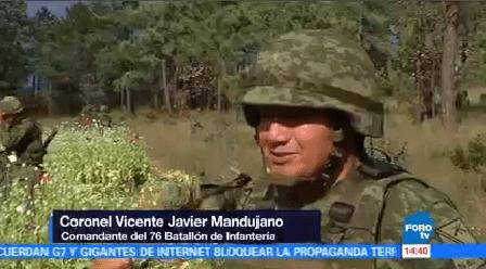 Destruyen Miles Hectáreas Cultivo Amapola Chihuahua