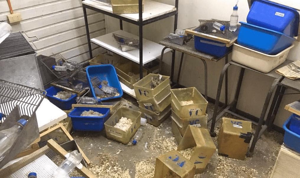 Animalistas vandalizan laboratorio y liberan a decenas de ratones