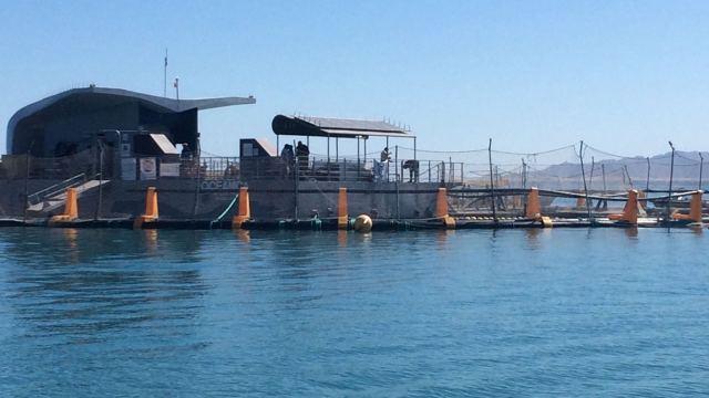 Más de 100 operaciones marítimas buscan proteger a la vaquita marina