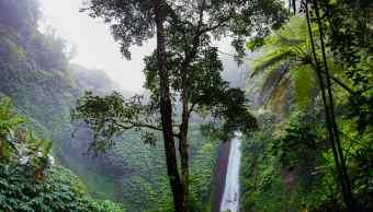 Jungla Peruana