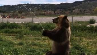 Captan a perro y oso divirtiéndose con manguera de agua en España