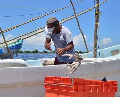 Aseguran 4 toneladas de pescado de procedencia ilegal en Campeche