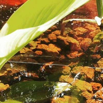 Estudiantes mexicanos usan lombrices para purificar aguas residuales