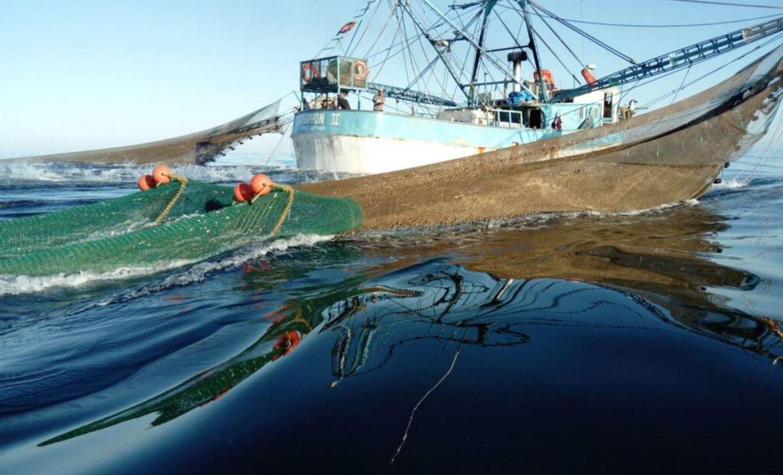 Profepa asegura barco que representaba un riesgo para la tortuga marina