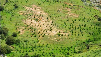 Reforestan áreas afectadas por incendios y sequías en SLP
