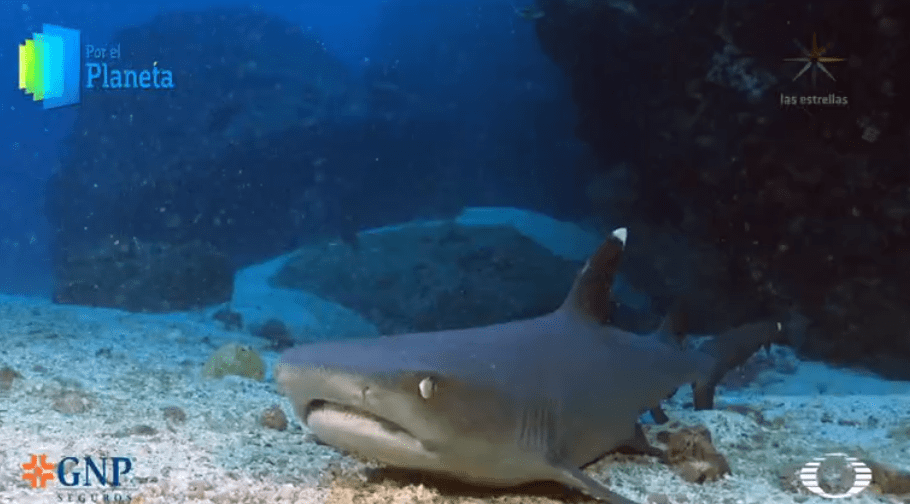 Tiburones punta blanca, muestra de prístina naturaleza de Isla del Coco