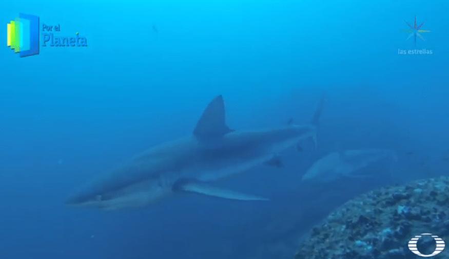Tiburones en Isla del Coco, Costa Rica