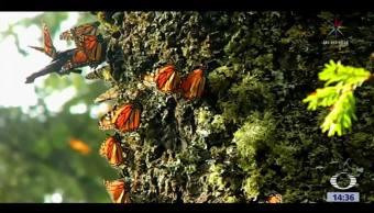 Mariposas monarca comienzan a llegar a México