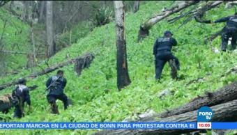 Policía Federal destruye plantíos de amapola en Guerrero