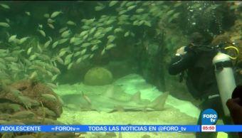 Exhiben ejemplar de tiburón sierra, especie en peligro de extinción