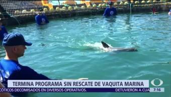 Termina programa para recuperar a vaquita marina en Alto Golfo de California