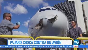 Extra Extra: Pájaro choca contra un avión en Miami