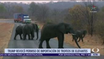 Trump suspende autorización para importar restos de elefantes cazados
