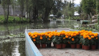 sismo 19s provoco hundimientos chinampera xochimilco