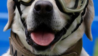 frida clinica veterinaria coyoacan perros rescatistas