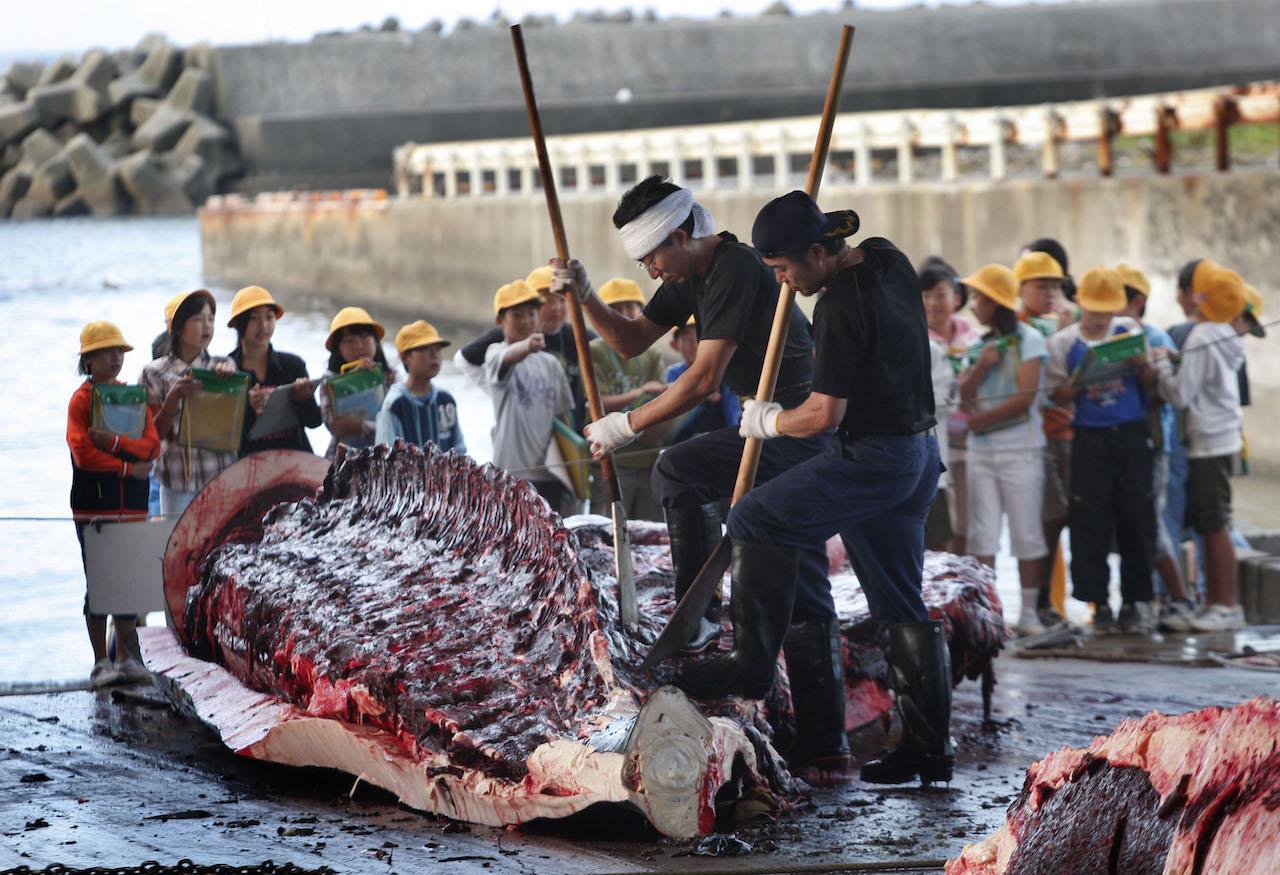 Mirá cómo cazan ballenas los buques japoneses — Brutal video