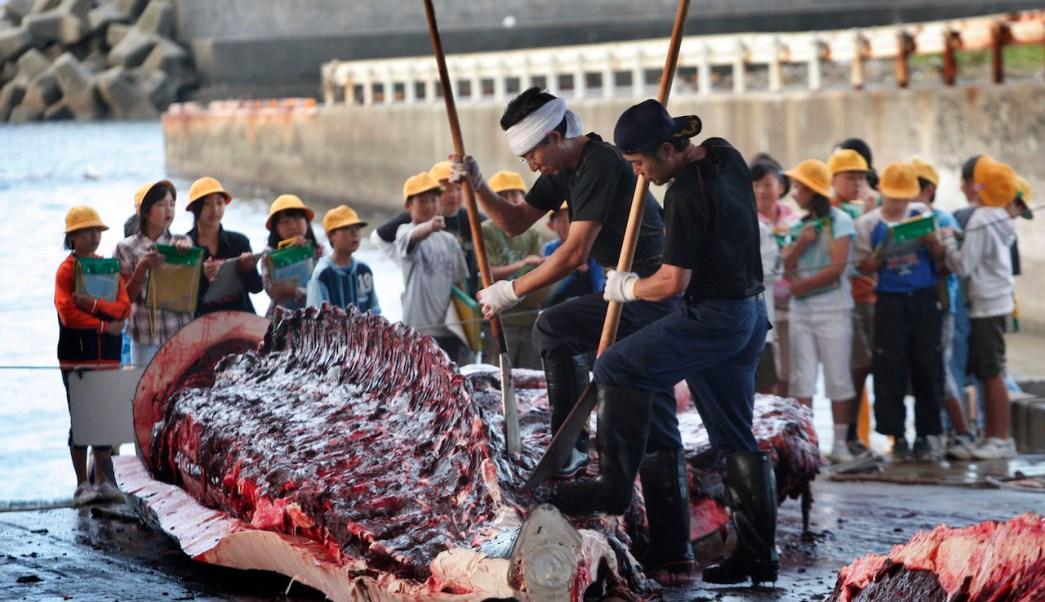 caza ballenas, Japón, Australia, ballenero