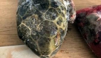 detienen dos personas carne tortuga marina sonora