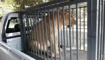 decomisan 49 ejemplares de vida silvestre en zoológico de Apatzingán, Michoacán. (Profepa)