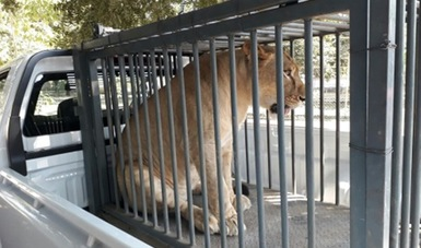 Decomisan 49 ejemplares de vida silvestre en zoológico de Apatzingán, Michoacán
