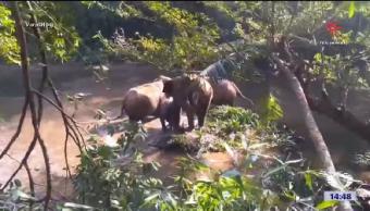 Elefante Agradece Rescate Habitantes India