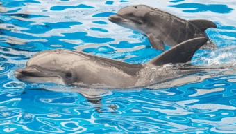 Corte avala prohibición espectáculos mamíferos marinos