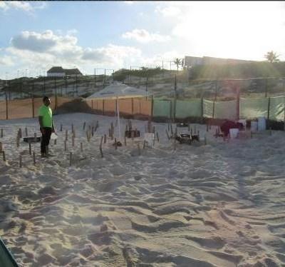 Inspeccionan corral de tortugas en Playa Delfines, Cancún, tras muerte de crías