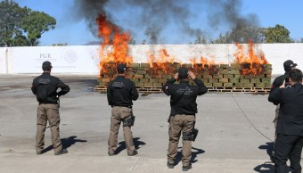 La PGR Jalisco destruye amapola y marihuan