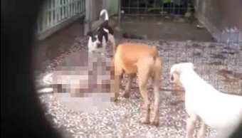 Denuncian a vecina de la Narvarte que alimentaba perros con cachorros