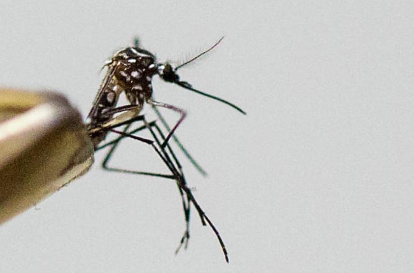 aumentan casos zika y dengue huasteca hidalguense