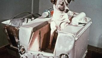 Hace 60 años Unión Soviética puso órbita Laika