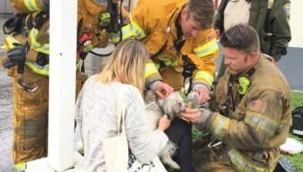 Un bombero en California lucha para salvar la vida de un perro