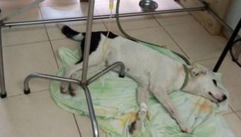 Una perrita muere de tristeza tras sufrir abandono en aeropuerto de Colombia